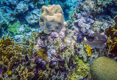Underwater Roatan-98
