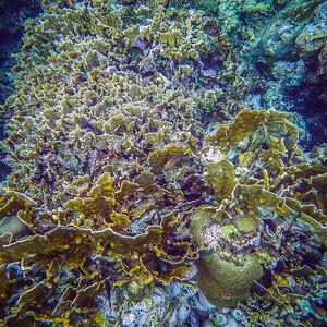 Underwater Roatan-58