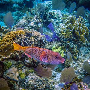 Underwater Roatan-78