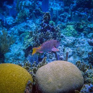 Underwater Roatan-77