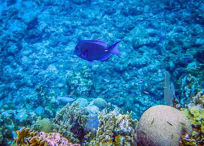 Underwater Roatan-99
