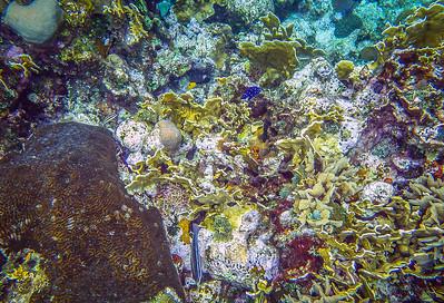 Underwater Roatan-95