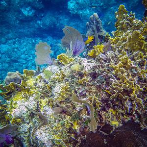 Underwater Roatan-96