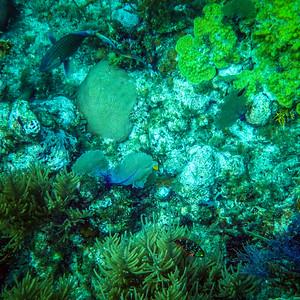 Underwater Roatan-66