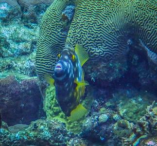 Underwater Roatan-83