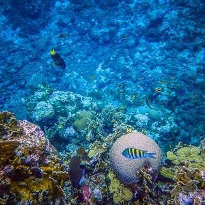 Underwater Roatan-10
