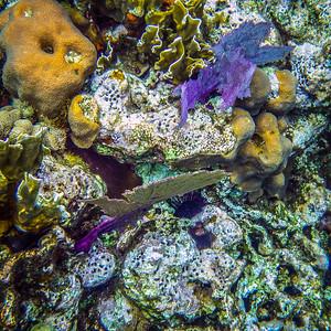 Underwater Roatan-70