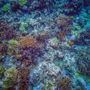 Underwater Roatan-62