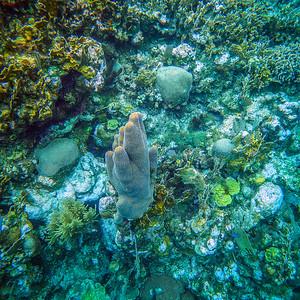 Underwater Roatan-55