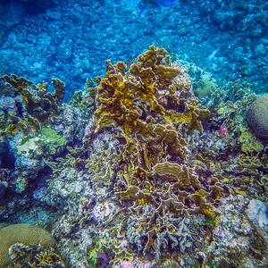 Underwater Roatan-92