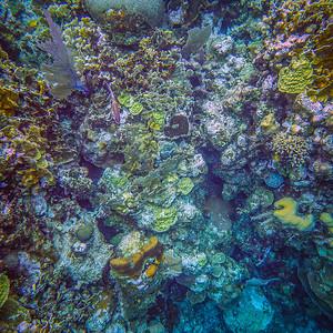 Underwater Roatan-0319