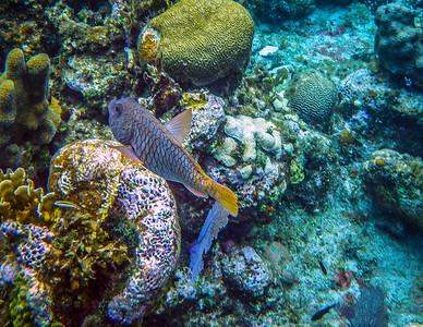 Underwater Roatan-76