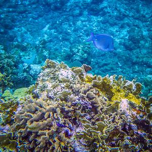 Underwater Roatan-89