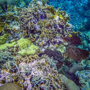 Underwater Roatan-88