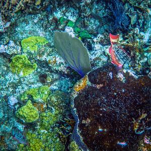 Underwater Roatan-64
