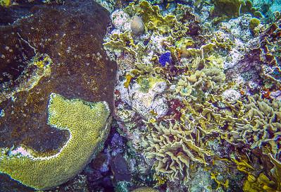 Underwater Roatan-94
