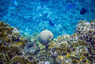 Underwater Roatan-93