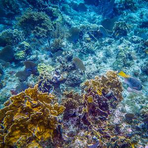 Underwater Roatan-86