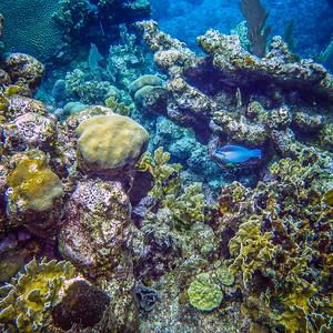 Underwater Roatan-12