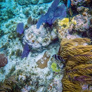 Underwater Roatan-79