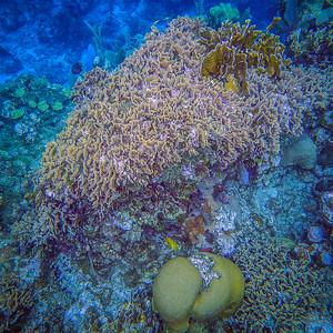 Underwater Roatan-60