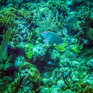 Underwater Roatan-63
