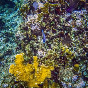 Underwater Roatan-13
