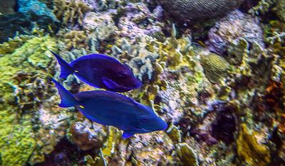 Underwater Roatan-100