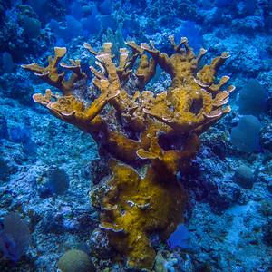 Underwater Roatan-80