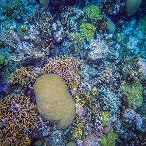 Underwater Roatan-59