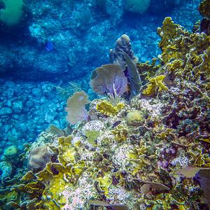 Underwater Roatan-97