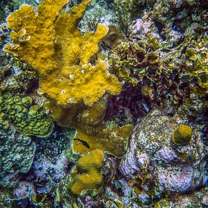 Underwater Roatan-68