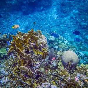 Underwater Roatan-91