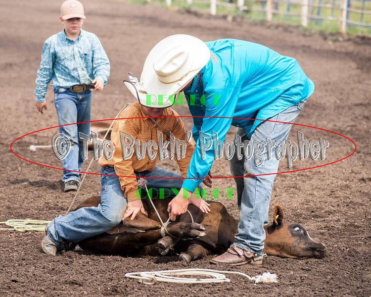 Elk2015_6527