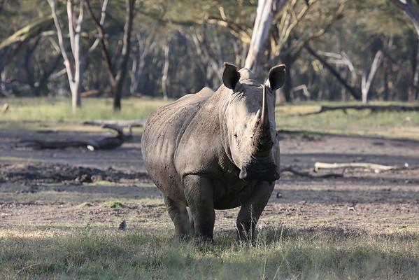 Berry Elbert Safari March 2015