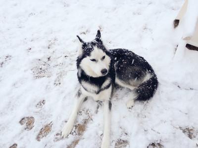 2015 Snow Storm