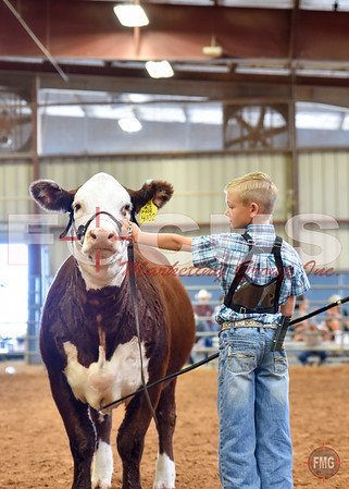 2015 TJHA/TJPHA HEREFORD STATE SHOW