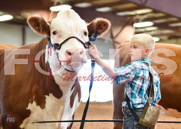 Owned Heifer Show - Candid Images
