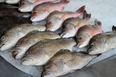 _DG16481-12R Fresh Fish