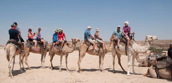 israel 2015 4 thurs 9.4.15 6 desert of zin 25 camels 2-1