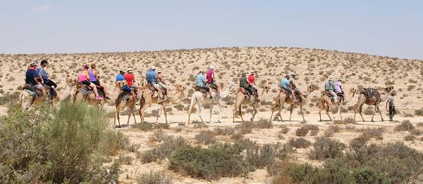 israel 2015 4 thurs 9.4.15 6 desert of zin 25 camels5-1