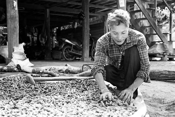 Peanut Farmer. Chang Mai, Thailand