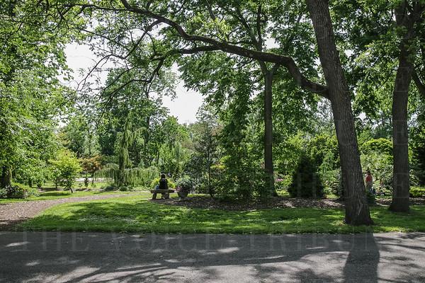 2015 Whitehall Gardens Peony Festival