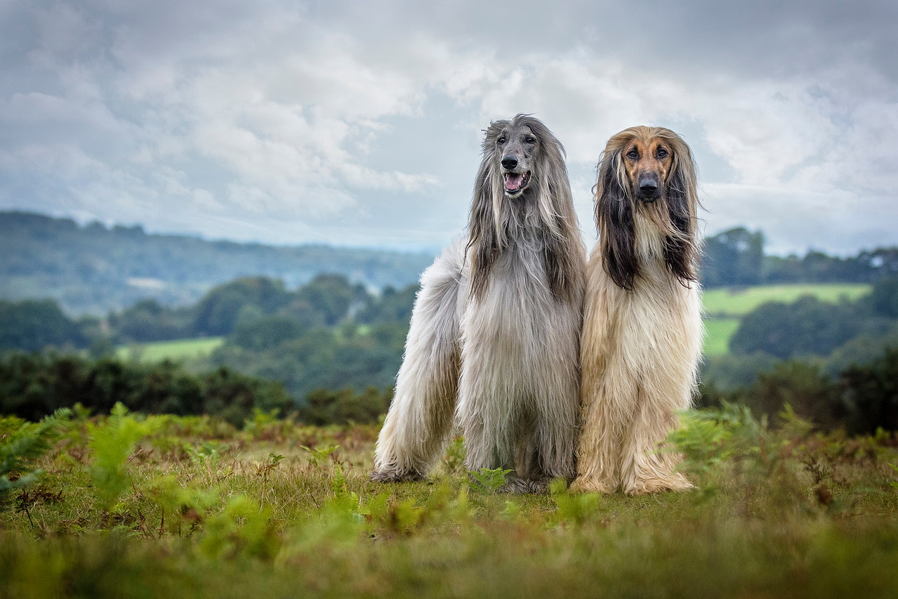 Dog Portrait 1st Place Winner, Jamie Morgan, UK