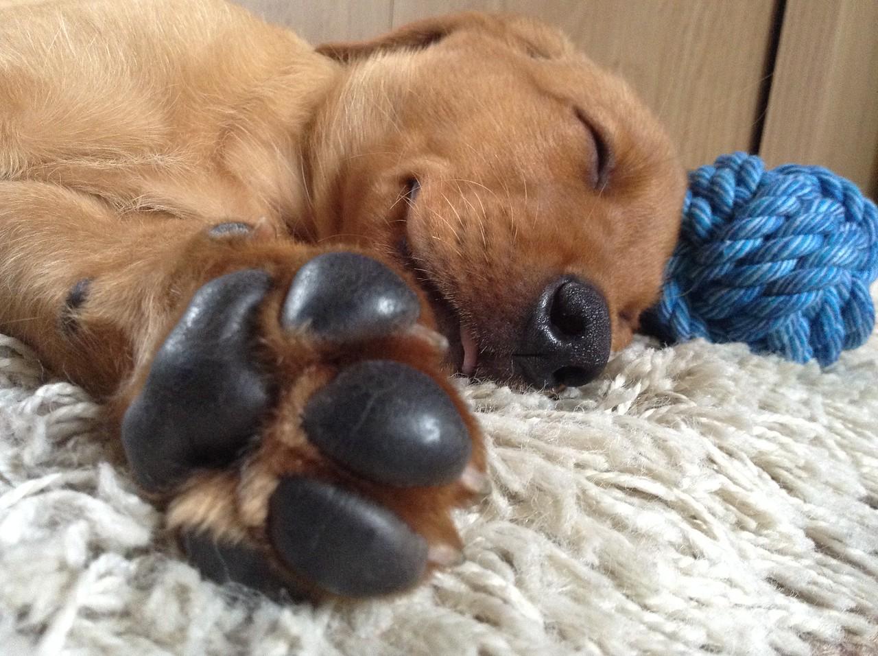 I Love Dogs Because ...1st Place Winner, Jade Hudson, UK