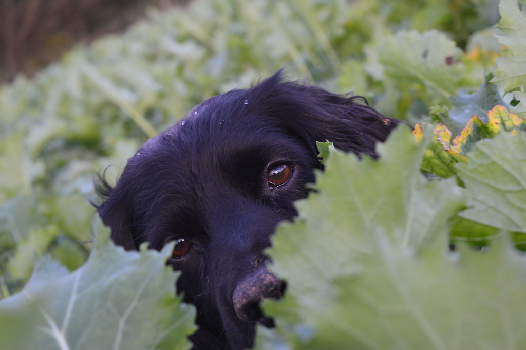 Judges Mention, I Love Dogs Because ... Georgina Cooper, UK