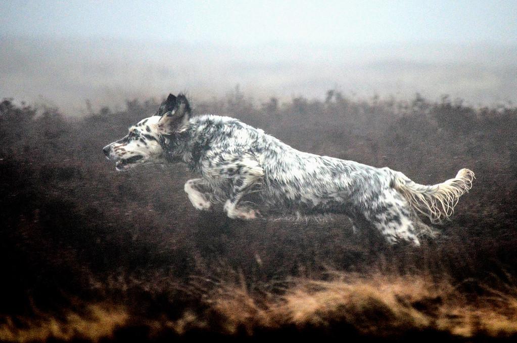 Judges Mention, Dogs at Work, Laura Kolbach, UK