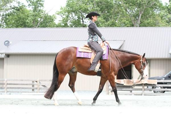 Wheeler Show Horses