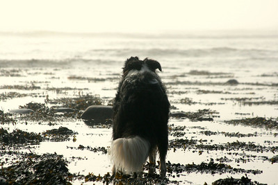 Jayce on his morning beach walk.  (It's DIRTY DOG TIME!)