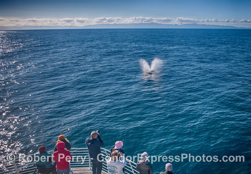 Humpback whale fans enjoy the spectacular view.